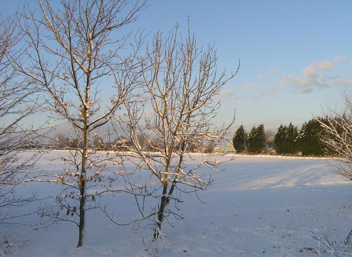 snowmurston027