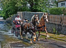 HORSE'S AND CART by Richard Peters