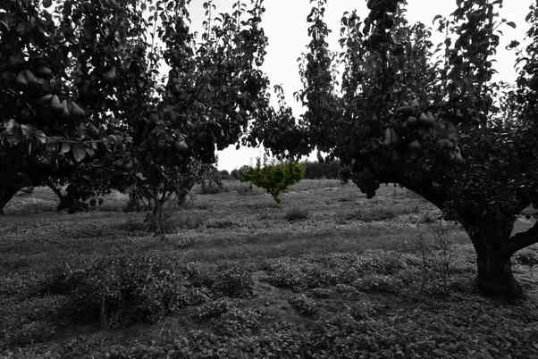 Orchard_24 by Terry Mahoney.jpg
