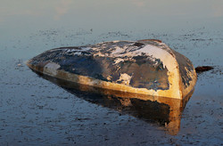 CAPSIZED by Richard Peters