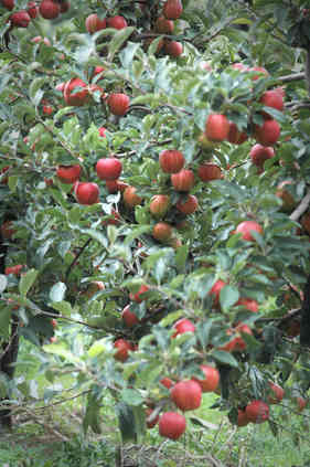Orchard_22 by Terry Ravell.jpg