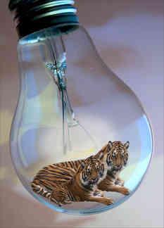 tiger tiger burning bright 2.jpg