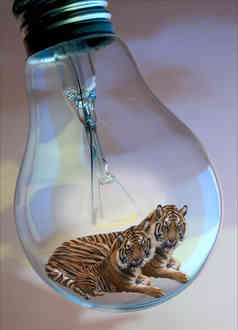 tiger tiger burning bright 2.jpg