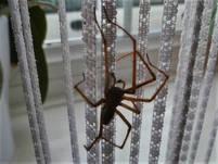 Spiders 8.jpg
