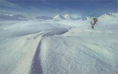 SNOWBOUND WILDERNESS by Ron Edwards.jpg