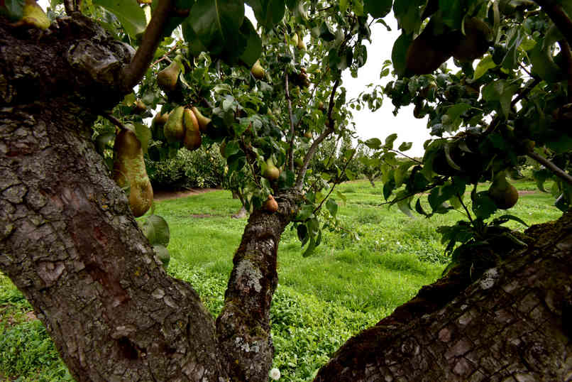 Orchard_18 by Terry Mahoney.jpg