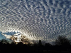 Skies 13.jpg