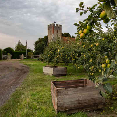 Orchard_28 by Travers Bean.jpg