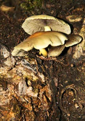 fungi.jpg
