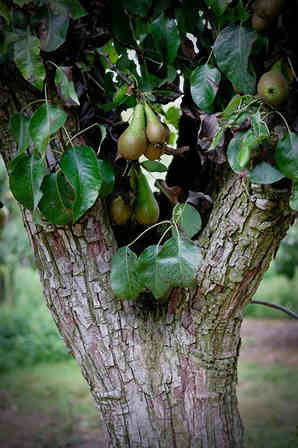 Orchard_01 by Carole Clarke.jpg