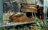 Something Rusty_03 by Terry Ravell.jpg