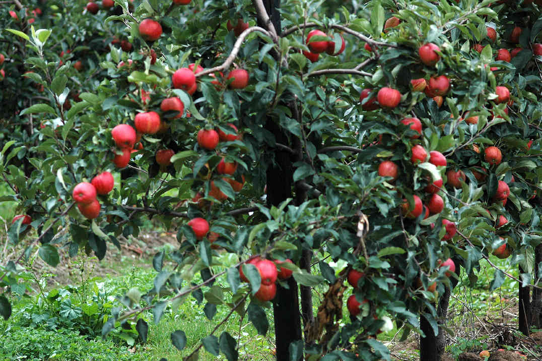 Orchard_11 by Terry Ravell.jpg
