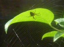 Spiders 12.jpg
