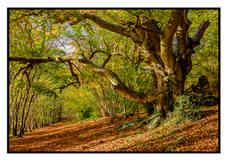 Autumnal Wood by Charlie Emery.jpg