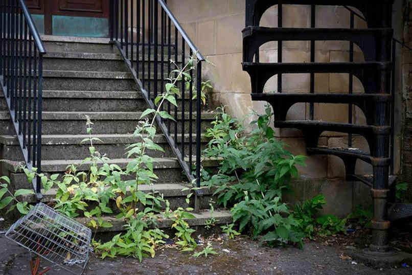 Steps_29 by Carole Clarke.jpg
