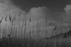 REEDS by Richard Peters