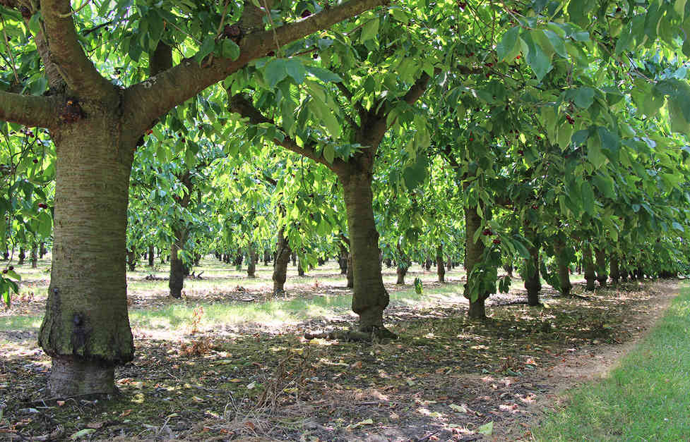 Orchard_04 by Marilyn Bliss.jpg