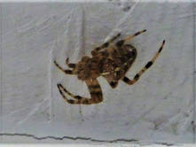 Spiders 3.jpg