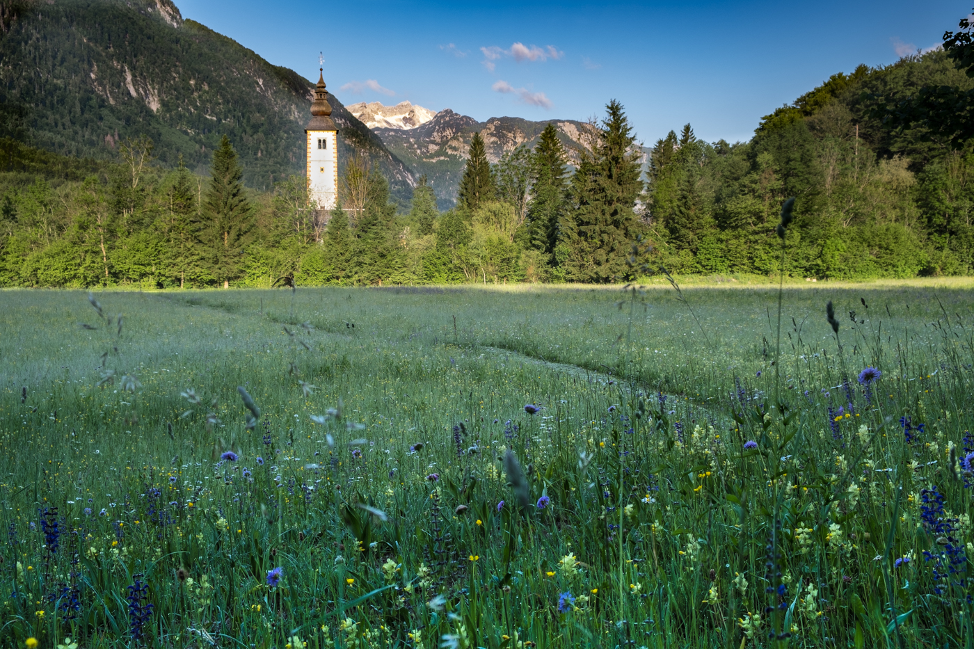SPRING MEADOW IN SLOVENIA by Chris Reynolds