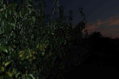Orchard_15 by Adrian Charlton.jpg