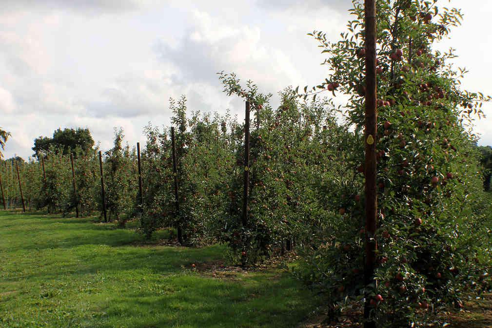 Orchard_27 by Kim Read.jpg