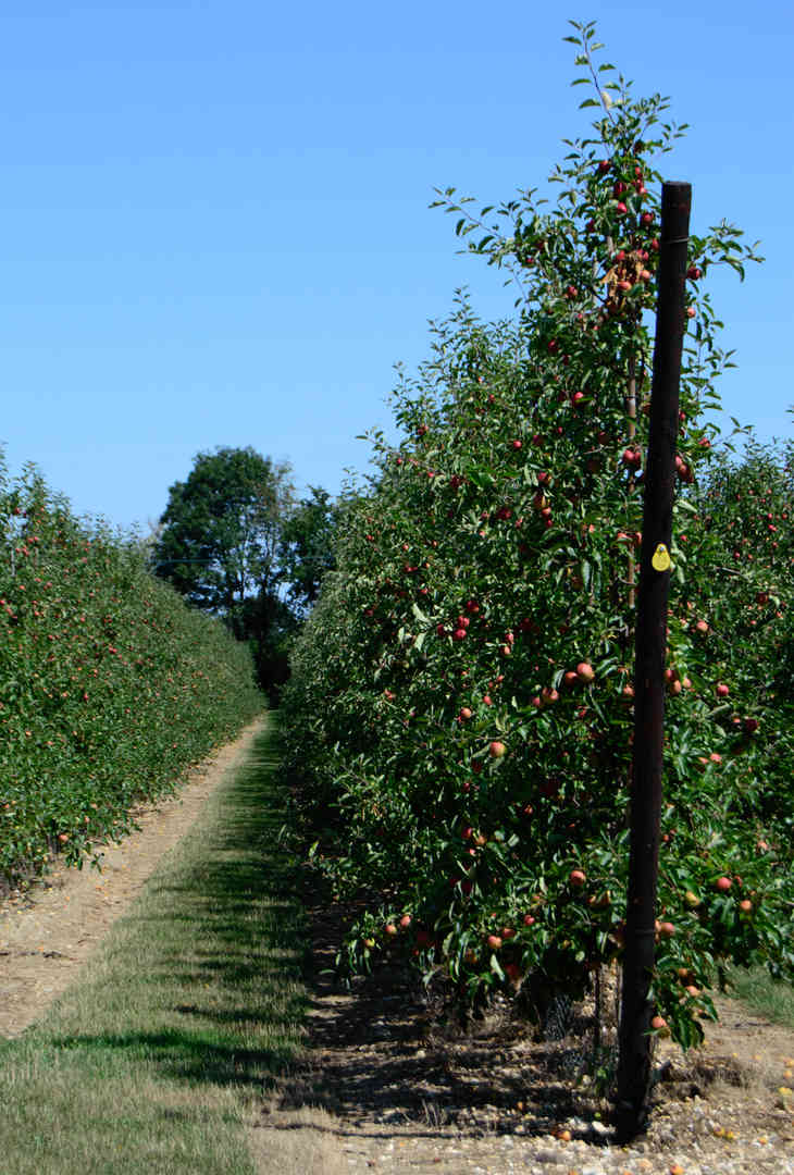 Orchard_14 by The Whorlows.jpg