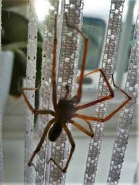 Spiders 7.jpg