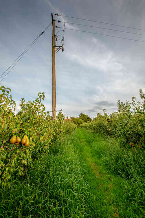 Orchard_12 by Travers Bean.jpg