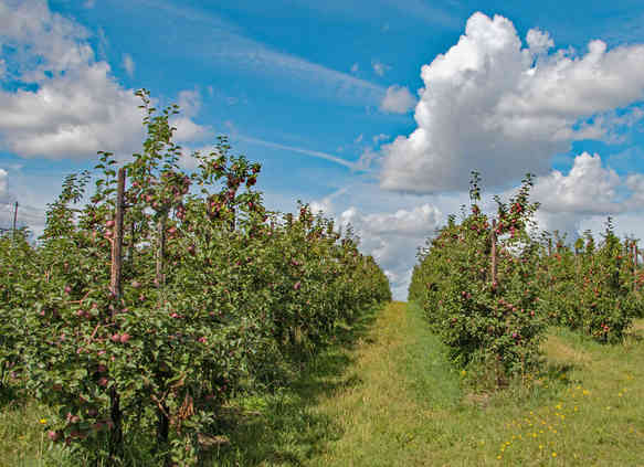 Orchard_21 by Richard Peters.jpg