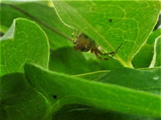 Spiders 2.jpg