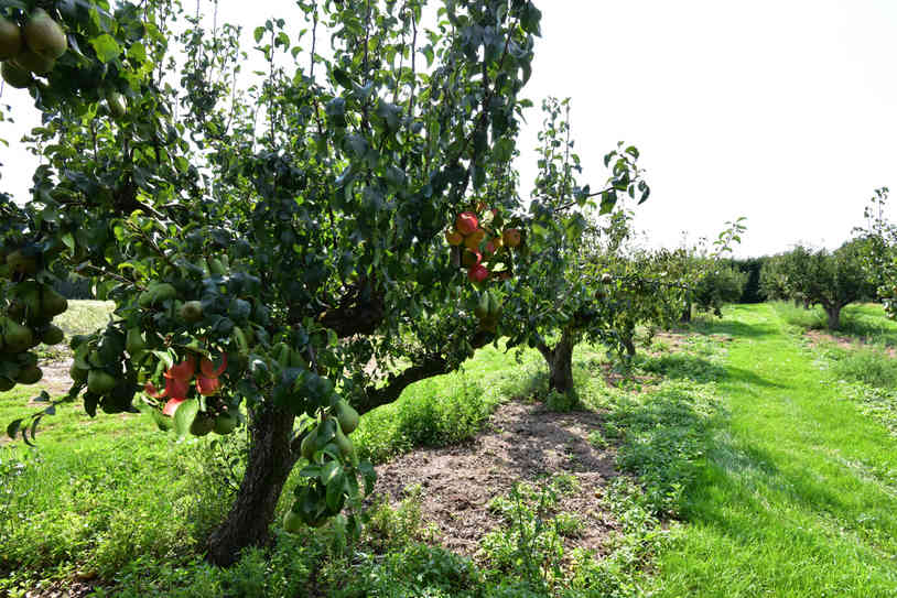 Orchard_06 by Terry Mahoney.jpg