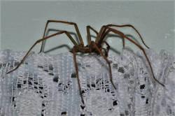 Spiders 4.jpg