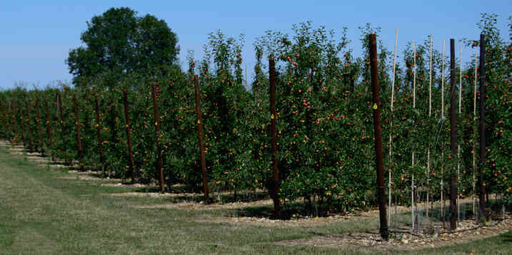 Orchard_26 by The Whorlows.jpg