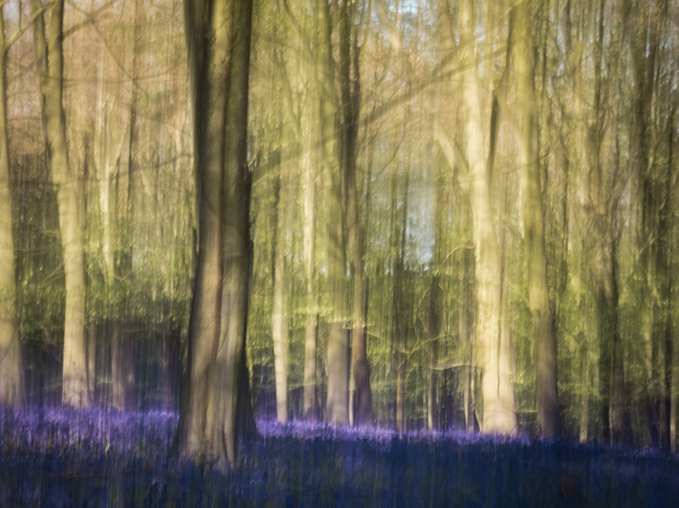 ENCHANTED WOODLAND by Jenny Monk