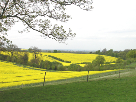 RAPE FIELDS 023