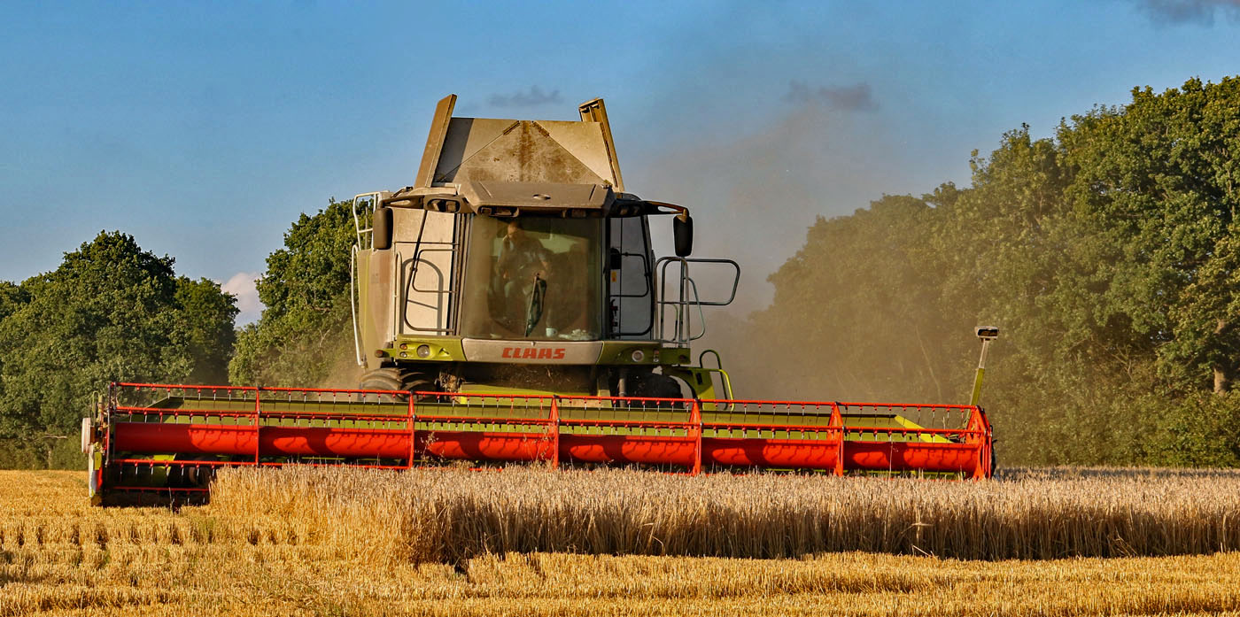 HARVESTING by Richard Peters
