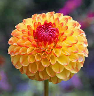 FLOWER OF COLOUR by Reg Holmes .JPG