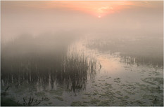DAWNS ARRIVAL ELMLEY  by Ron Edwards.jpg