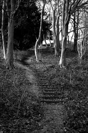 woodland steps bw.jpg