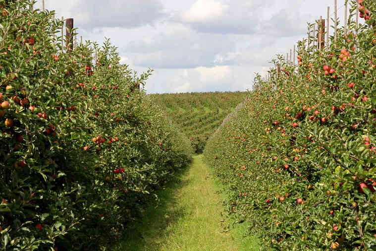 Orchard_25 by Marilyn Bliss.jpg