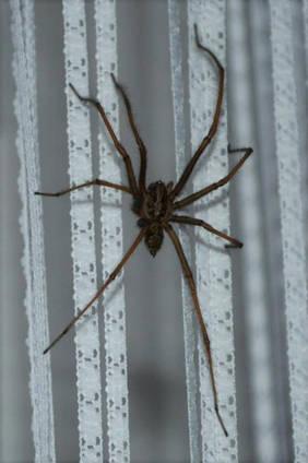 Spiders 6.jpg