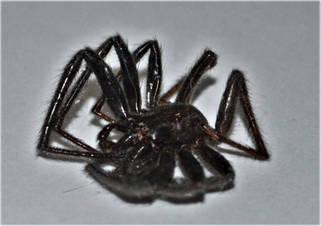 Spiders 1.jpg
