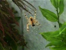Spiders 11.jpg