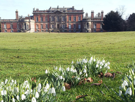 Snowdrop spectacular… rolling out the white carpet at Wentworth Woodhouse