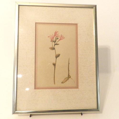 Botanical Prints With Frame-Set of 3
