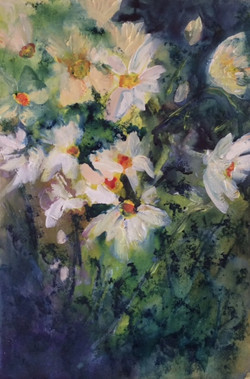 Wild Spring Daisies