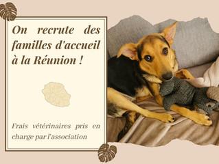 Vous vivez sur l'île de la Réunion, devenir famille d'accueil vous intéresse, l'association recrute.