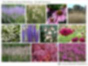 Garden Design Moodboard