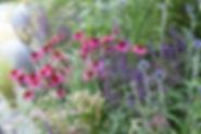 Woodland Garden St Albans