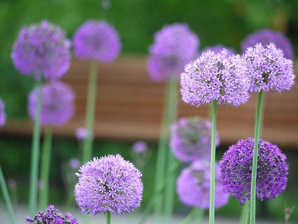 Garden Design Hertfordshire London